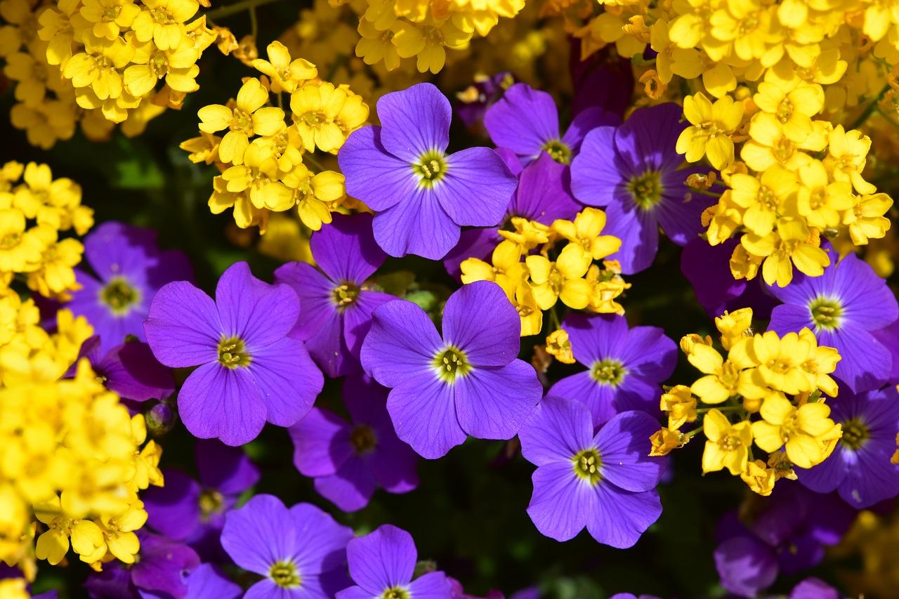 Plantes à massif : à planter fin Avril !